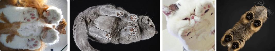 Des chats, des cartons, du tout mignon !