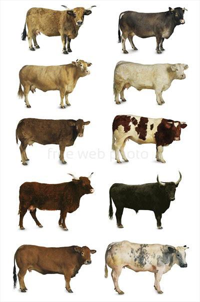 Bulls & Cows, quand on jouait au Master Mind avec un crayon et des vaches