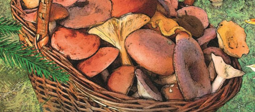 Fungi, des bolets, du beurre et du cidre