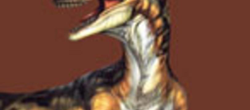 Deux bruno pour un Raptor !