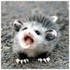 Opossum47